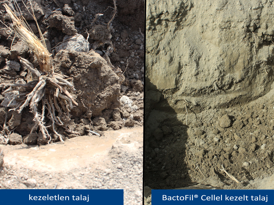 BactoFil Cell_kontroll